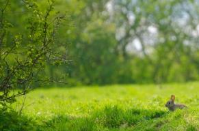 bunny-164444_960_720