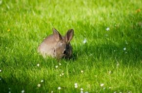 rabbit-1628089_960_720