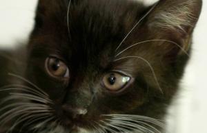 Kissanpentu Koikkarin kissalassa